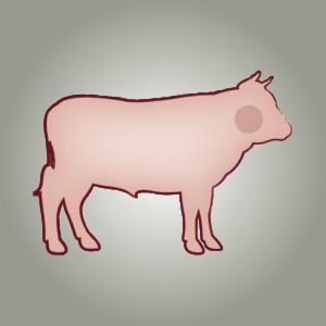 seitz-barf-symbole-14