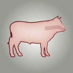 seitz-barf-symbole-16