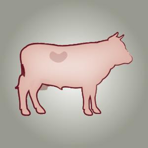 seitz-barf-symbole-25