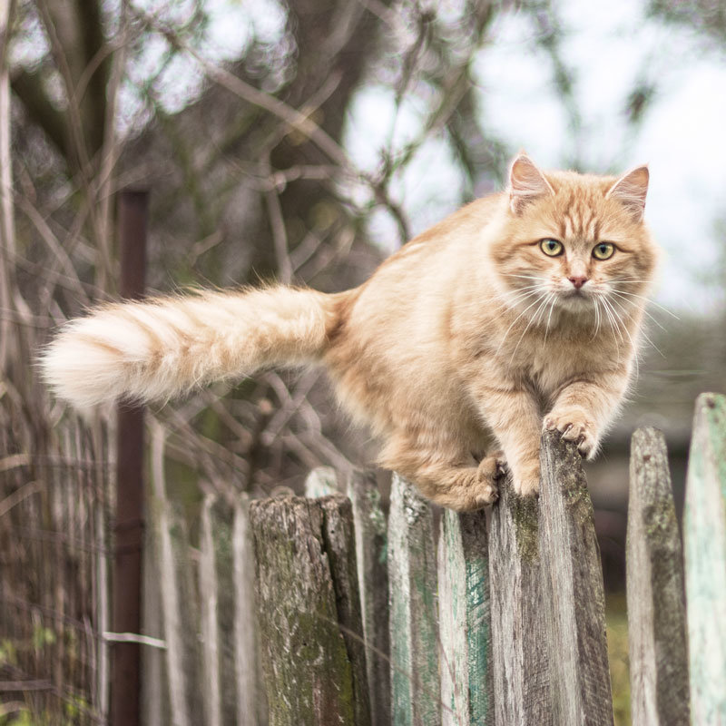 seitz_cat_on_fence_q