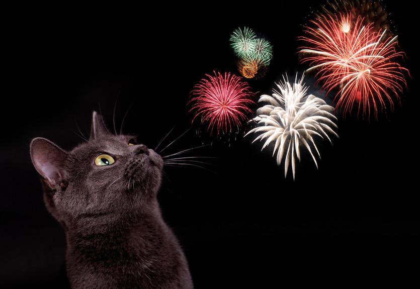 Katze mögen selten Feuerwerke