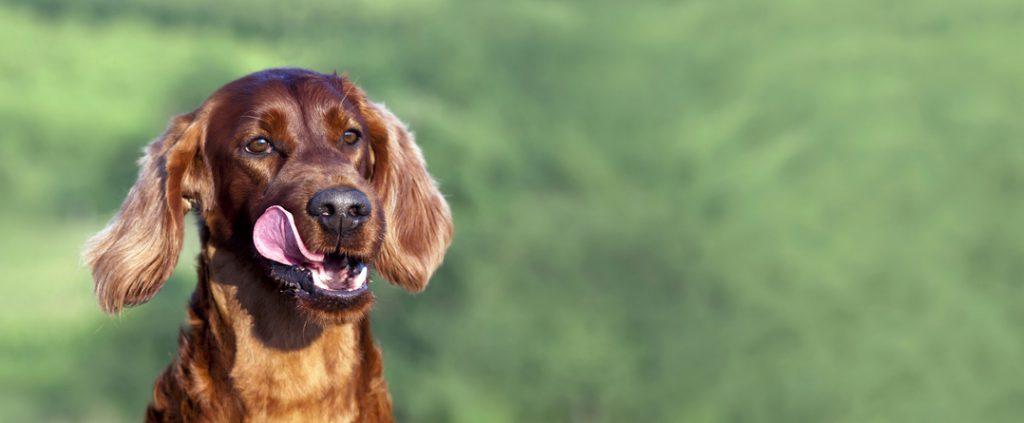 Hund Gesundheit