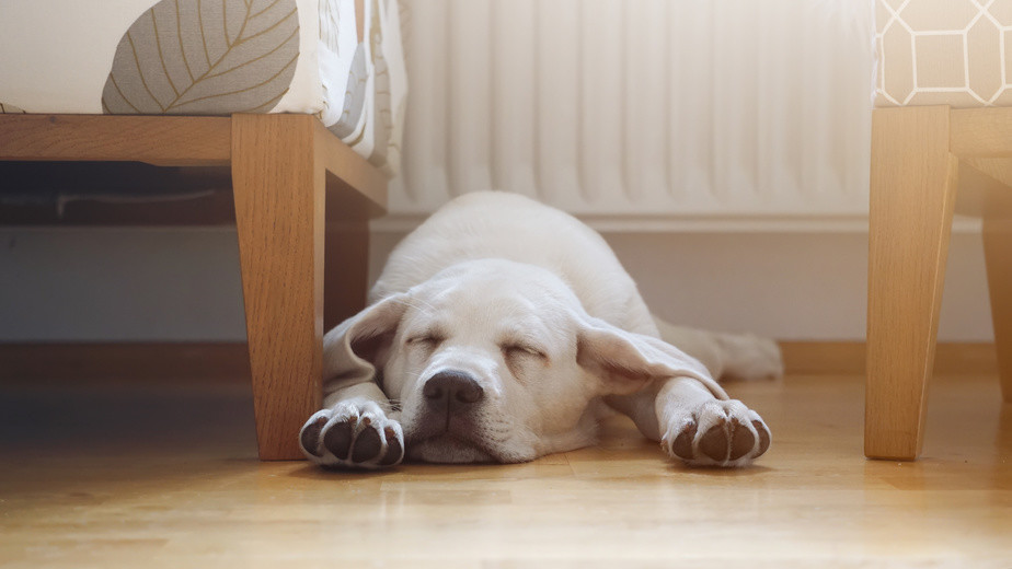 Wieviel Schlaf braucht ein Hund?