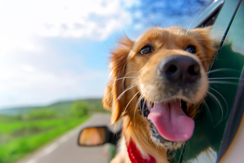 Hund und Barf im Urlaub
