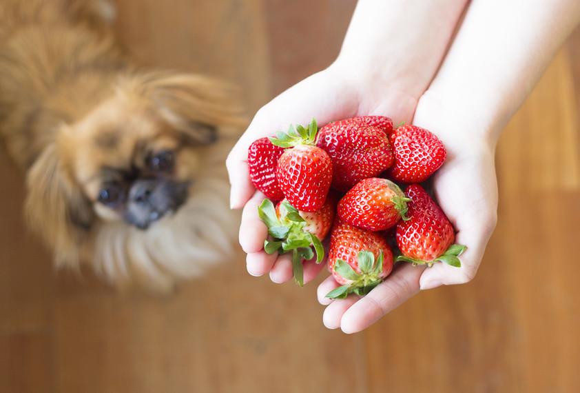 Leichte Sommerküche Essen Und Trinken : Sommerküche für hund und katze bei hitze seitz 100% barf
