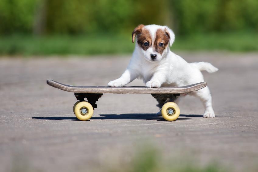 Hund mit Skateboard