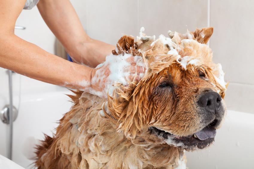 Hund mit Hundeshampoo in der Badewanne
