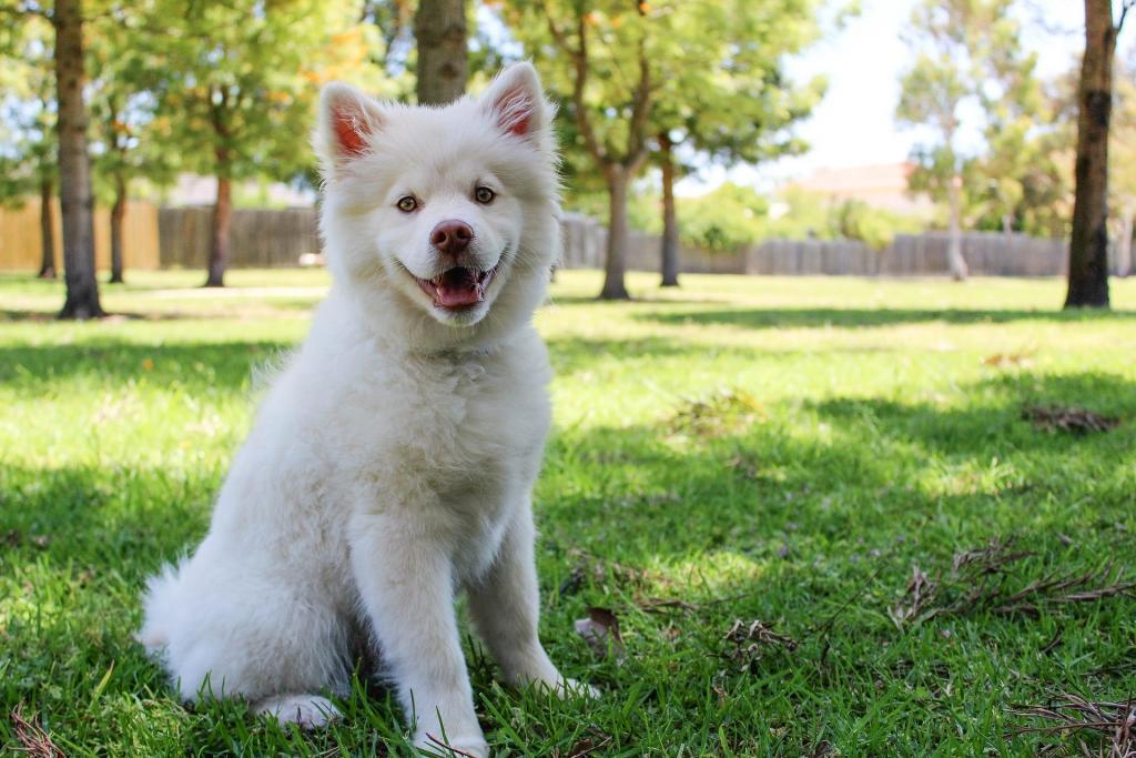 Bild_Fellwechsel_pixabay Hunde Nahrung